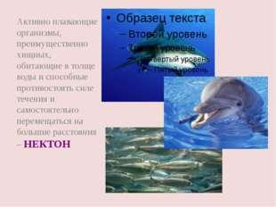 Активно плавающие организмы, преимущественно хищных, обитающие в толще воды и
