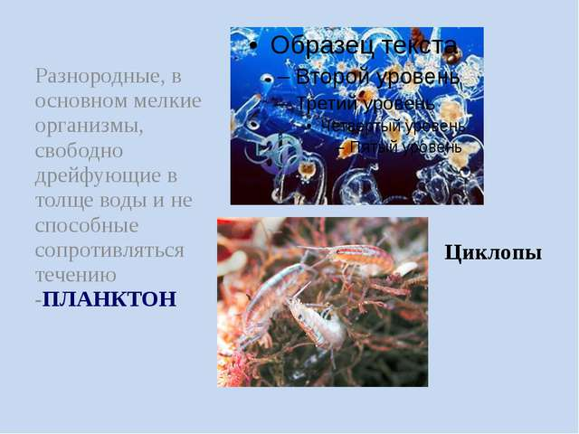 Разнородные, в основном мелкие организмы, свободно дрейфующие в толще воды и...