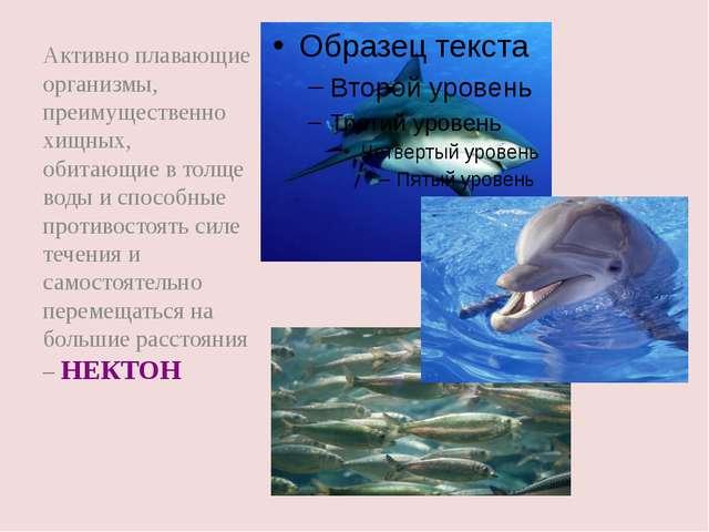 Активно плавающие организмы, преимущественно хищных, обитающие в толще воды и...