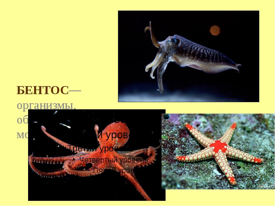 БЕНТОС— организмы, обитающие на морском дне.