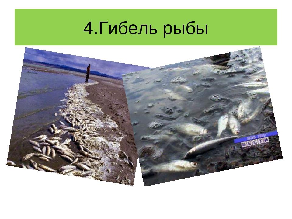 4.Гибель рыбы