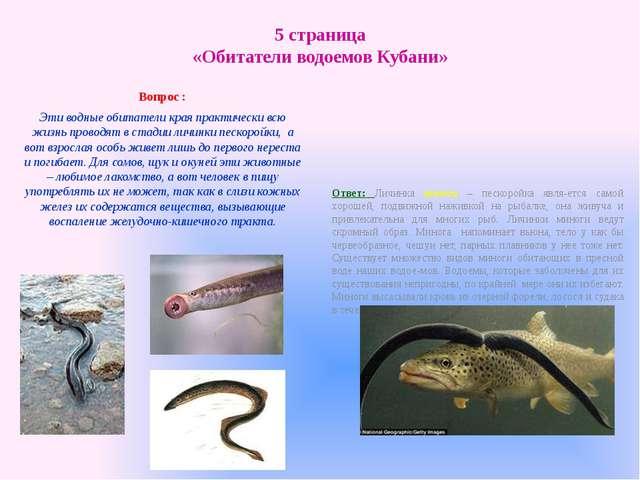 5 страница «Обитатели водоемов Кубани» Вопрос : Эти водные обитатели края пра...