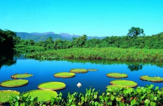 http://www.tourexpress.ru/images/content/pantanal.jpg