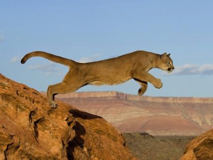 http://animals-wild.ru/uploads/1275672472_src43.jpg