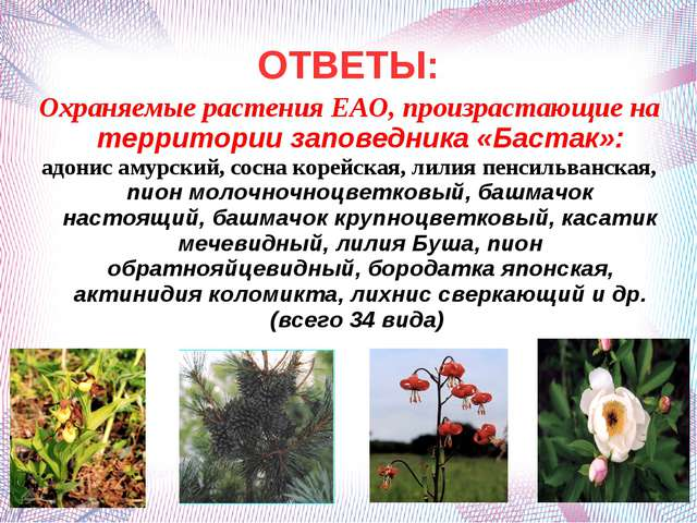 ОТВЕТЫ: Охраняемые растения ЕАО, произрастающие на территории заповедника «Ба...