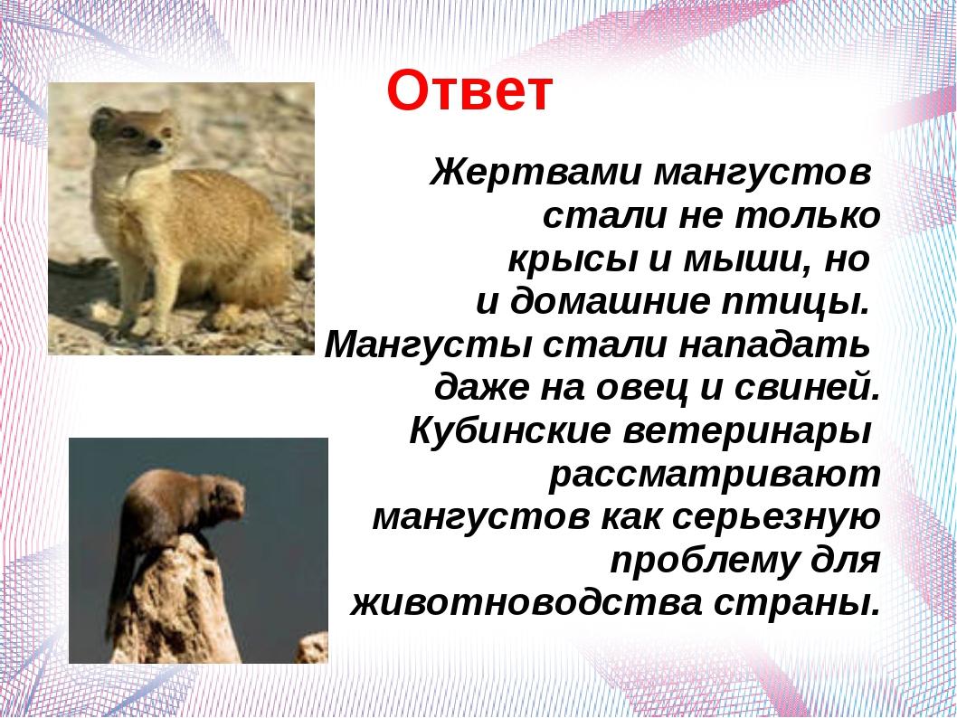 Ответ Жертвами мангустов стали не только крысы и мыши, но и домашние птицы. М...