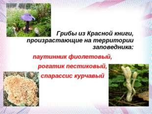 Грибы из Красной книги, произрастающие на территории заповедника: паутинник ф