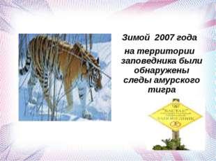 Зимой 2007 года на территории заповедника были обнаружены следы амурского ти