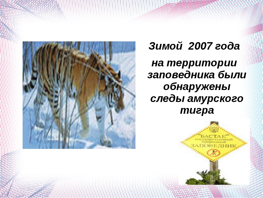 Зимой 2007 года на территории заповедника были обнаружены следы амурского ти...