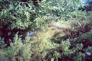 Фото реки Крымза
