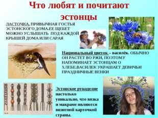 Что любят и почитают эстонцы ЛАСТОЧКА, ПРИВЫЧНАЯ ГОСТЬЯ ЭСТОНСКОГО ДОМА.ЕЕ ЩЕ