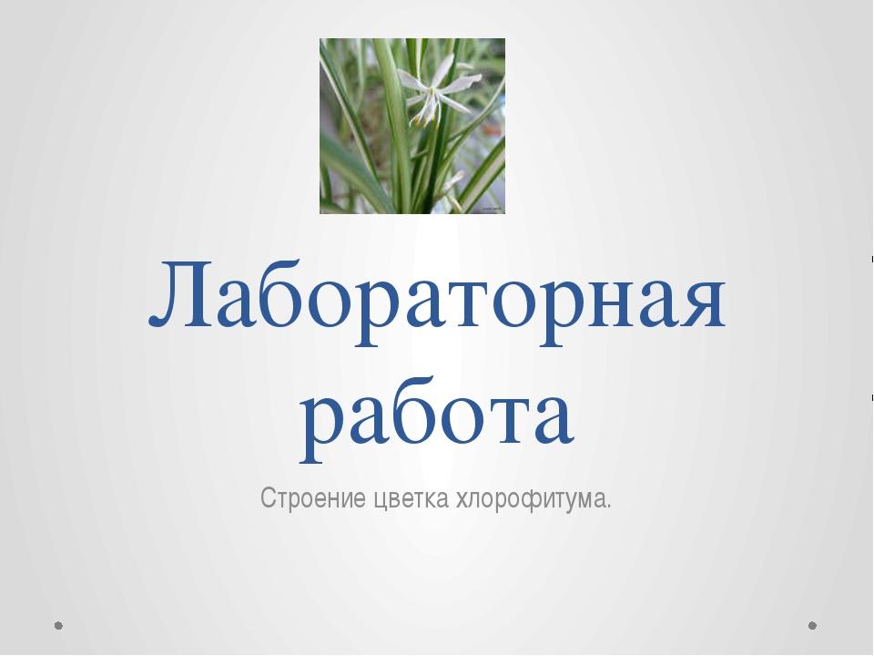 Лабораторная работа Строение цветка хлорофитума.