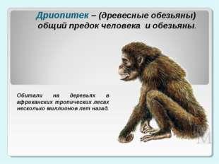 Дриопитек – (древесные обезьяны) общий предок человека и обезьяны. Обитали на