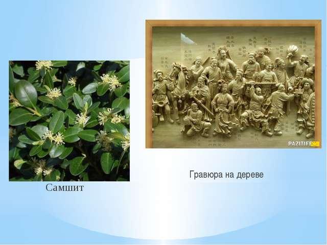Самшит Гравюра на дереве