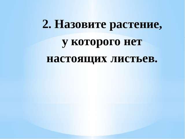 2. Назовите растение, у которого нет настоящих листьев.