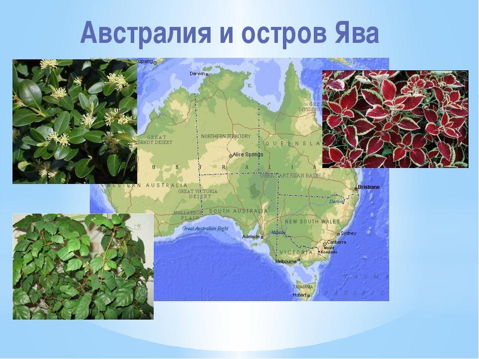 Австралия и остров Ява