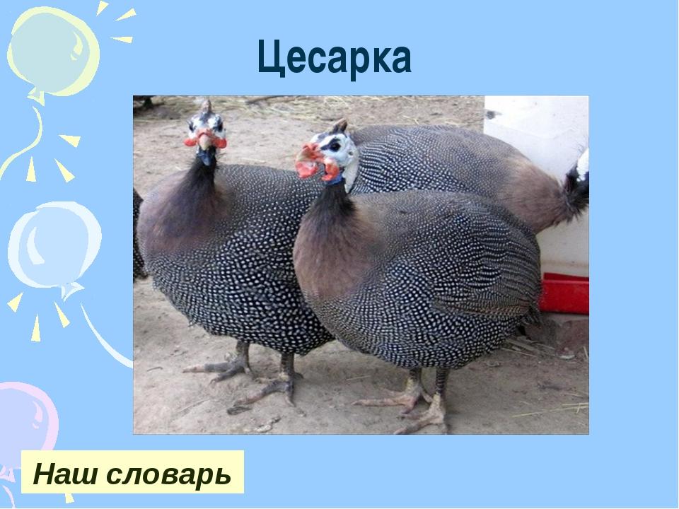 Цесарка Наш словарь