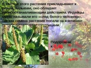 6. Листья этого растения прикладывают к ранам, нарывам, оно обладает кровоост