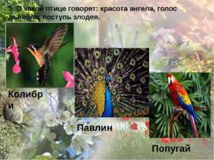 5. О какой птице говорят: красота ангела, голос дьявола, поступь злодея. Коли