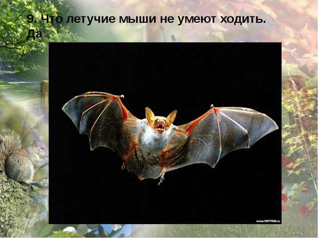 9. Что летучие мыши не умеют ходить. Да