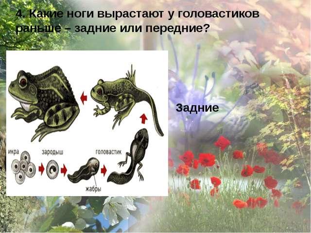 4. Какие ноги вырастают у головастиков раньше – задние или передние? Задние