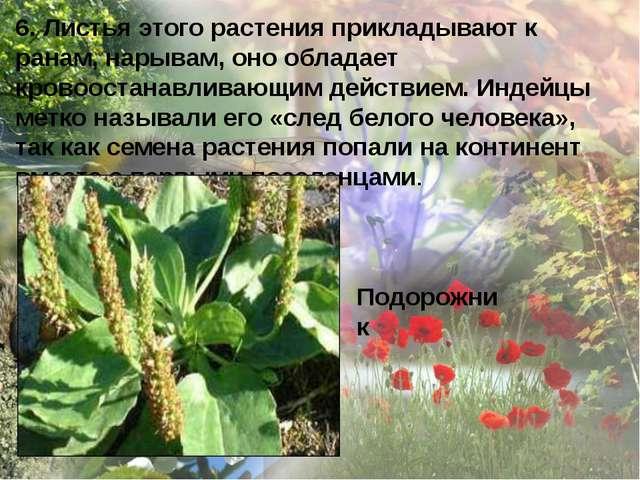 6. Листья этого растения прикладывают к ранам, нарывам, оно обладает кровоост...