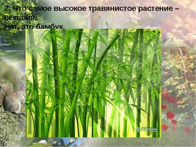 2. Что самое высокое травянистое растение – секвойя. Нет, это бамбук.