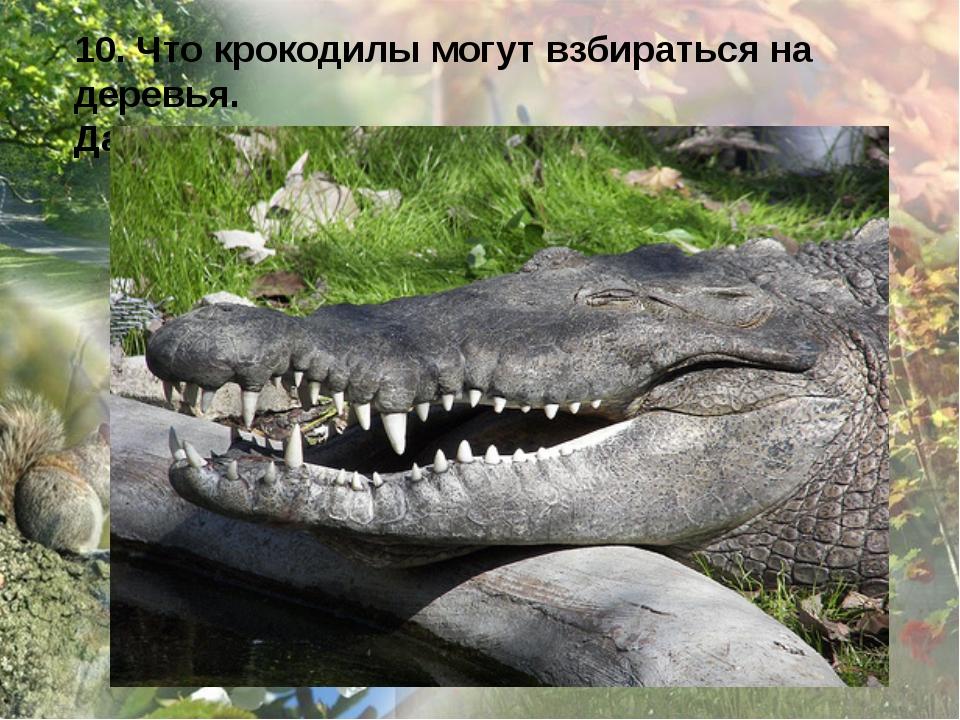 10. Что крокодилы могут взбираться на деревья. Да, могут