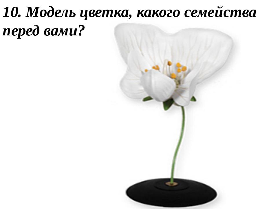 10. Модель цветка, какого семейства перед вами?
