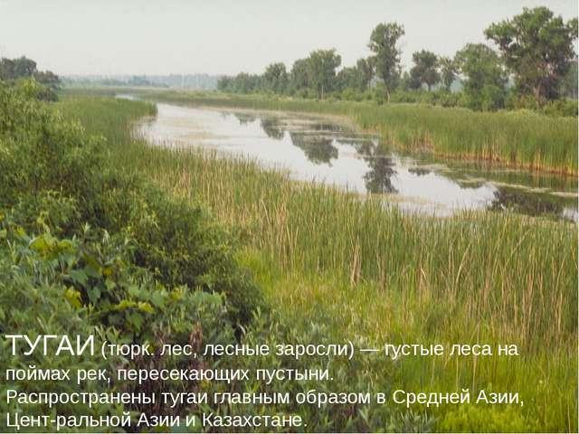 ТУГАИ (тюрк. лес, лесные заросли) — густые леса на поймах рек, пересекающих п...