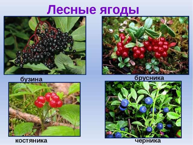 Лесные ягоды бузина брусника черника костяника