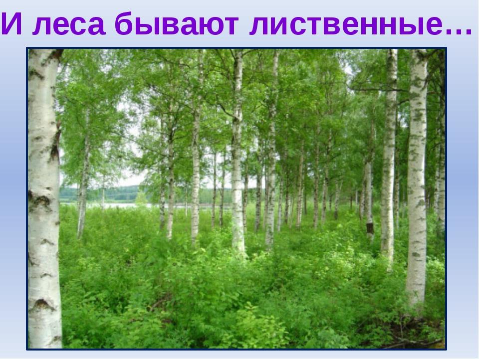 И леса бывают лиственные…