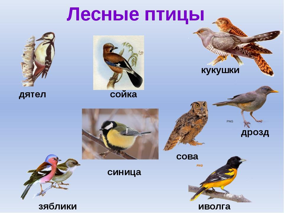 этом счастливом птицы донбасса фото с названиями и описанием счастью