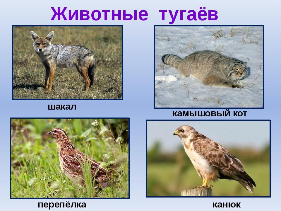 Животные тугаёв шакал камышовый кот канюк перепёлка