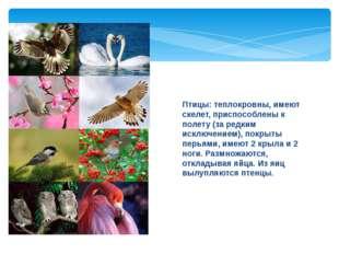 Птицы: теплокровны, имеют скелет, приспособлены к полету (за редким исключени