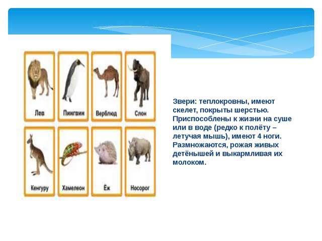 Звери: теплокровны, имеют скелет, покрыты шерстью. Приспособлены к жизни на с...