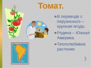 Томат. В переводе с перуанского – крупная ягода. Родина – Южная Америка. Теп
