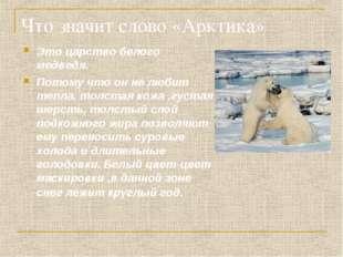 Что значит слово «Арктика» Это царство белого медведя. Потому что он не любит