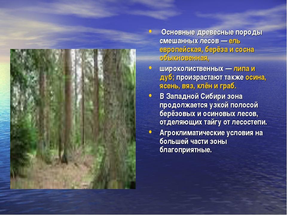 Основные древесные породы смешанных лесов— ель европейская, берёза и сосна...