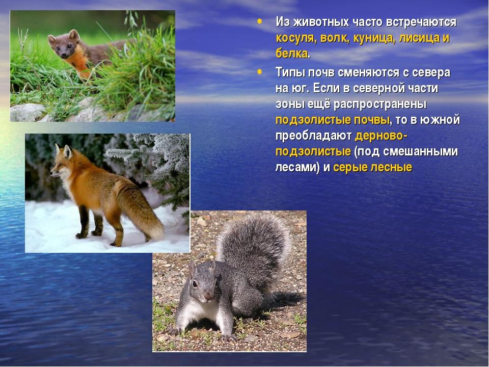 Из животных часто встречаются косуля, волк, куница, лисица и белка. Типы почв...