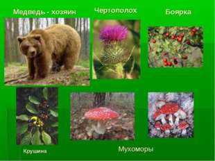 Медведь - хозяин Чертополох Боярка Крушина Мухоморы