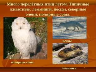 Много перелётных птиц летом. Типичные животные: лемминги, песцы, северные оле