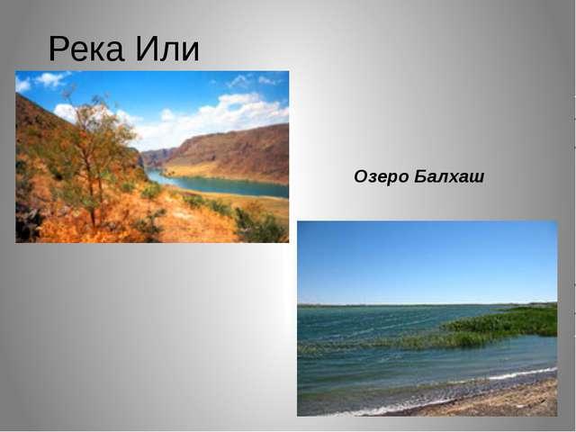 Река Или Озеро Балхаш