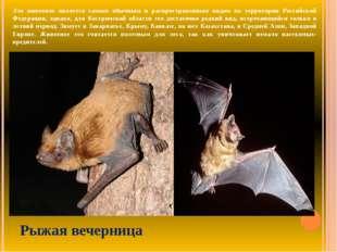 Это животное является самым обычным и распространенным видом на территории Ро