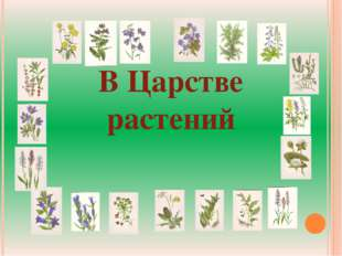 В Царстве растений