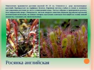 Многолетнее травянистое растение высотой 10—25 см. Относится к роду насекомоя
