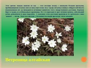 Этот цветок знаком многим из нас — этот вестник весны с нежными белыми цветка