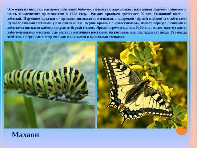 Это одна из широко распространенных бабочек семейства парусников, названная К...