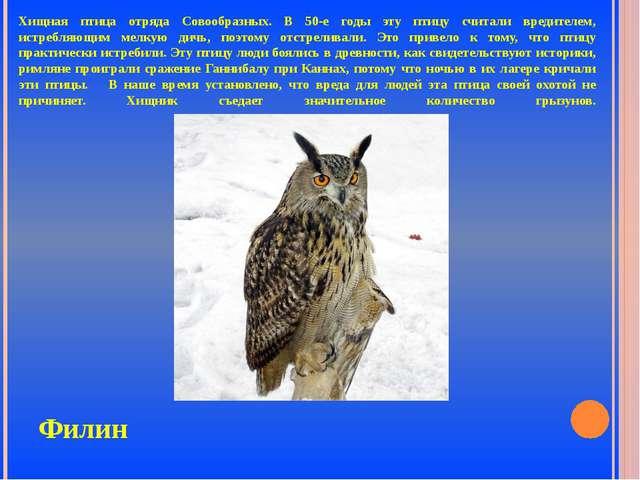 Хищная птица отряда Совообразных. В 50-е годы эту птицу считали вредителем, и...