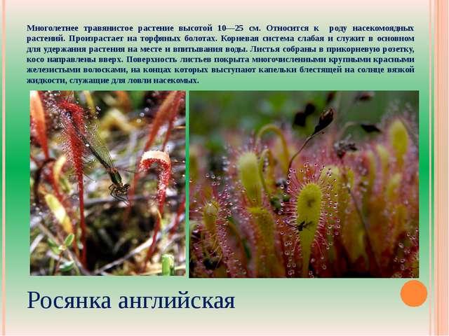 Многолетнее травянистое растение высотой 10—25 см. Относится к роду насекомоя...